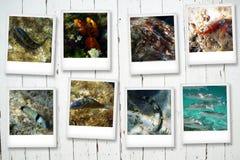Vykort från havet Arkivbilder