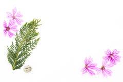 Vykort med det tomma stället för inskrift från spridda rosa färger sm Royaltyfria Bilder