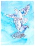 Vykort med duvor på en blå bakgrund Royaltyfria Bilder