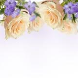 Vykortet med eleganta blommor och tömmer stället för din text Arkivbilder