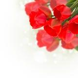Vykortet med eleganta blommor och tömmer stället för din text Arkivfoto