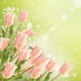Vykortet med tulpan för nya blommor och tömmer stället för din te Arkivbild