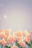 Vykortet med tulpan för nya blommor och tömmer stället för din te Royaltyfria Bilder