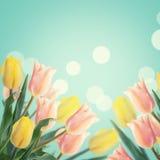Vykortet med tulpan för nya blommor och tömmer stället för din te Royaltyfri Foto
