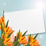 Vykortet med tulpan för nya blommor och tömmer stället för din te Fotografering för Bildbyråer