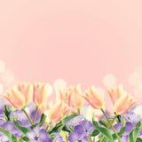 Vykortet med tulpan för nya blommor och tömmer stället för din te Royaltyfria Foton