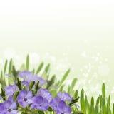 Vykortet med vårblommor och tömmer stället för din text Royaltyfri Bild