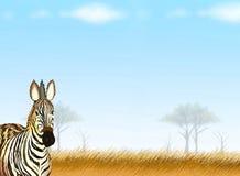 Vykortet och noterar pappers- av en sebra i Safari royaltyfri illustrationer
