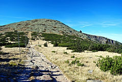 Vysoke kolokulle i Krkonose berg Arkivfoto