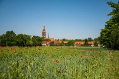 Wörlitz achter cornfield met papavers stock afbeelding