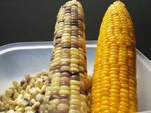 Wächserner Mais und Zuckermais Stockfoto