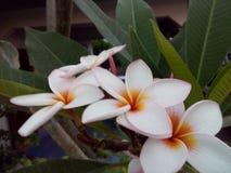Während Blumen Lizenzfreies Stockbild