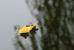 Während des Herbstes Stockfoto