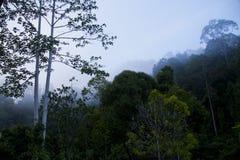 Dunstiger blauer Wolken-Wald Lizenzfreie Stockfotos