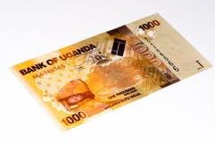 Währungsbanknote von Afrika Lizenzfreie Stockfotos