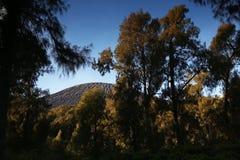 wälder lizenzfreie stockfotos