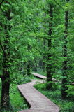 wälder Stockbild