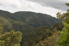 Wälder auf den Steigungen Lizenzfreies Stockbild