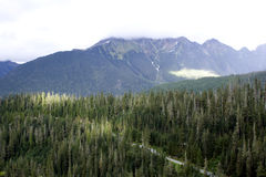 Wälder auf Mt.-Bäcker Lizenzfreies Stockbild