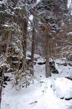 Wälder des Nordens Stockfoto