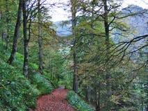 Wälder im Thur River Valley oder im Thurtal-Tal lizenzfreie stockfotografie