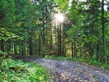 Wälder im Thur River Valley oder im Thurtal-Tal lizenzfreies stockfoto
