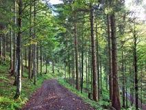 Wälder im Thur River Valley oder im Thurtal-Tal lizenzfreie stockbilder