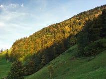Wälder im Thur River Valley oder im Thurtal-Tal lizenzfreies stockbild