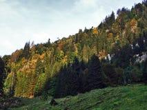 Wälder im Thur River Valley oder im Thurtal-Tal stockbild