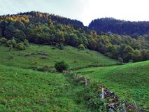 Wälder im Thur River Valley oder im Thurtal-Tal stockfotografie