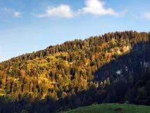 Wälder im Thur River Valley oder im Thurtal-Tal lizenzfreie stockfotos