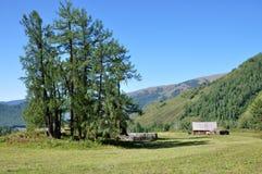 Wälder und Berge Lizenzfreie Stockbilder