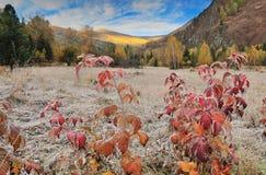 Wälder und Berge Stockfotografie