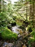 Wälder von Nova Scotia Stockfoto
