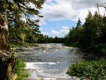 Wälder von Nova Scotia Stockfotografie