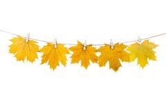 Wäscheklammern auf dem Seil, das Herbstlaub auf einem weißen backgro hält Stockfoto