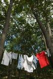 Wäscherei, die zwischen Bäumen hängt Lizenzfreies Stockbild