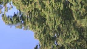 Wässern Sie Beschaffenheit des reflektierten Himmel- und Nadelbaumbaums stock footage