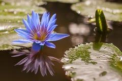 Wässern Sie Blume stockfotografie