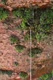 Wässern Sie Bratenfett vom roten Stein mit grünem Moos lizenzfreie stockfotografie