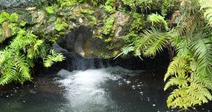 Wässern Sie das Fließen in See mit Naturfelsen und pflanzen Sie Farn stock video footage