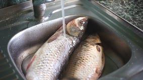 Wässern Sie das Gießen über zwei Brachsenfische in der Küche stock video