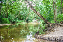 Wässern Sie den Strom oder Fluss, die den grünen Wald durchfließen Stockfotografie