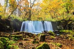 Wässern Sie Fall von Oirase-Strom im Herbst bei Towada Hachimantai Nati lizenzfreie stockbilder