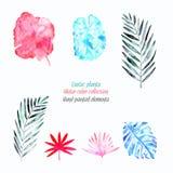Wässern Sie farbige Sammlung exotische Blätter und Blumen auf dem weißen Hintergrund stockfotografie