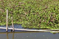 Wässern Sie Hyacinth Wastewater mit Filtrationssystem im Kanalfluß Lizenzfreie Stockbilder