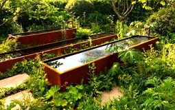 Wässern Sie im Garten bei Chelsea Flower Show in London lizenzfreie stockbilder
