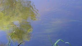 Wässern Sie mit den kleinen Fischen, die vorwärts gegen den Strom schwimmen stock footage