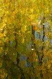 Wässern Sie Oberfläche mit der Reflexion des gelben Laubs der Herbstbäume, auf der Oberfläche des Wassers, das unterschiedliche B Stockbild