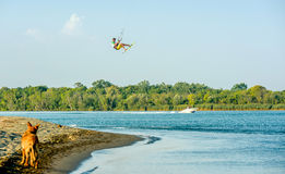 Wässern Sie Spaß und das Kiteboarding in Ada Bojana, Montenegro, mit einem Hund Lizenzfreies Stockbild